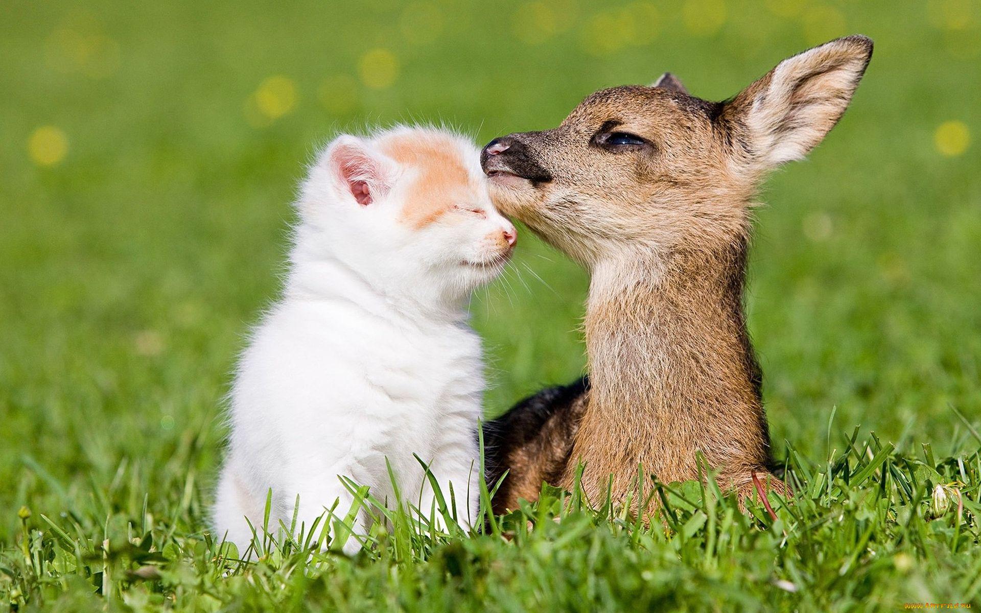 свежие картинки про животных выбрал